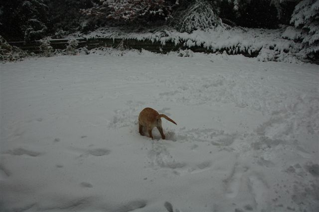 Harold playing in the snow